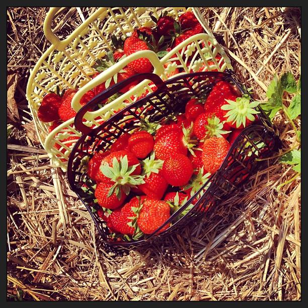 #Sonmer #Sonne #Erdbeerfeld