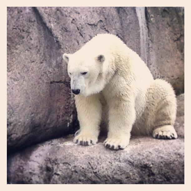 Perfektes Eisbärenwetter