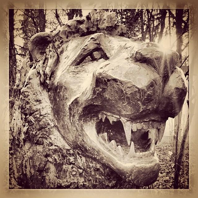 #lion #löwe #augsburg #zoo