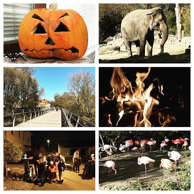 One day in October #Holiday #Zoo #Halloween