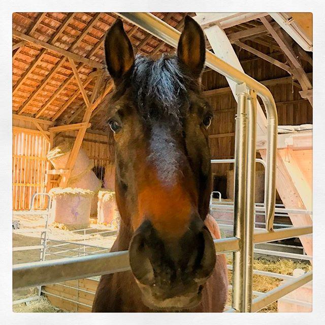 Servus! #Pferd #ReitenMitDenKids