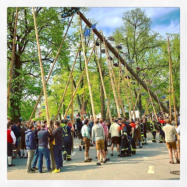 Wie jedes Jahr, wurde der neue #Maibaum heute in #Gernlinden von Hand aufgestellt ????