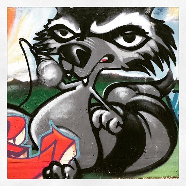 Das inoffizielle Kasseler Wappentier... #Waschbär #Raccoon #Kassel