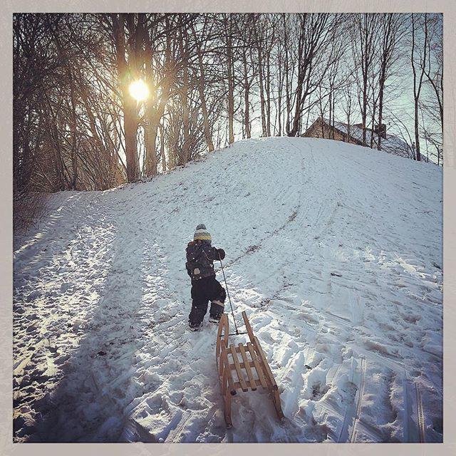 #Schlittenfahren #Wintersun