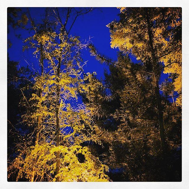 #illumination #biergarten #maisach