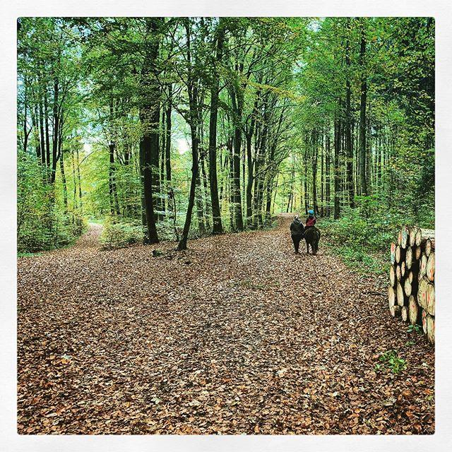 #Reiten #Herbst #Pony