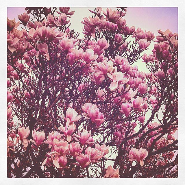 #Springtime's coming...  #spring #frühling