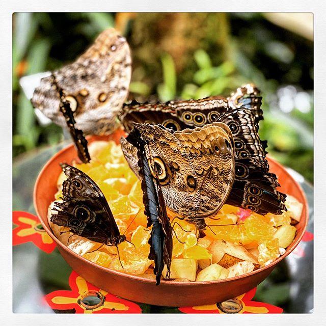 #Butterflys